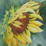 2014.Christopherson.Sunflower_sm