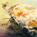 2014.Waugaman.Turtle_sm
