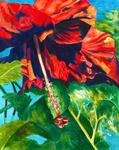 Becic, Robin Keauhou Hideaway Hibiscus 2015