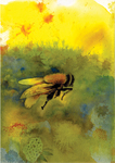 Parker, Janet Tuscan Bee 2015
